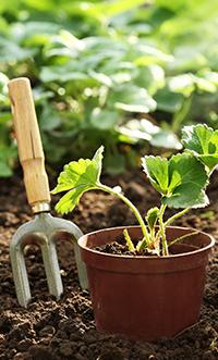 garden_dirt